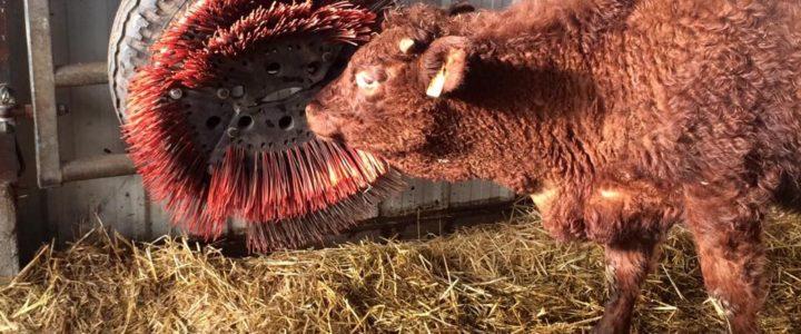 Idée Astuce: La Brosse à Vaches