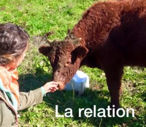 relation homme animal