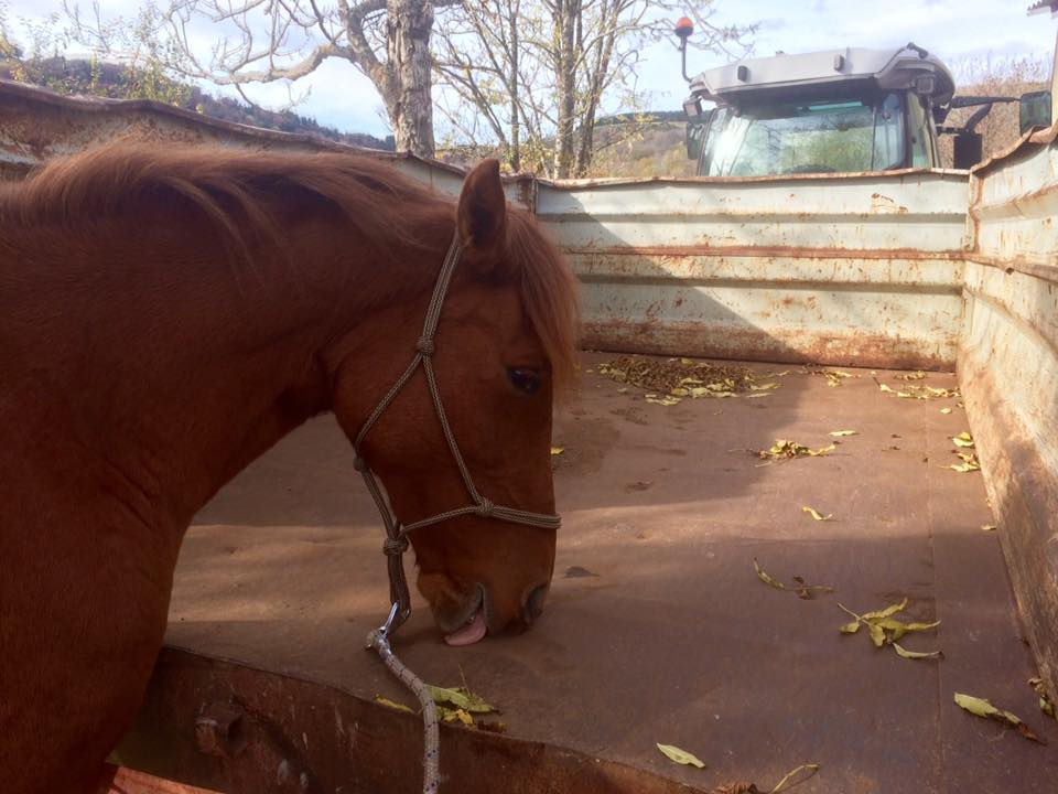 cheval ethologie