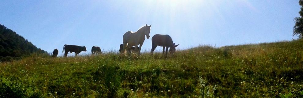 sl_cheval-bovides-anes-comportement