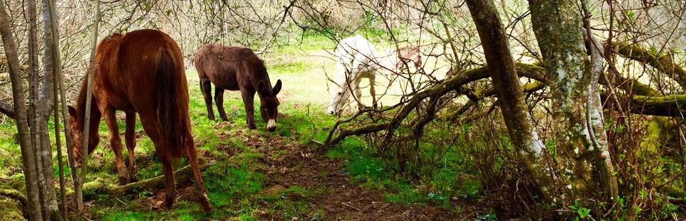 sl_cheval1